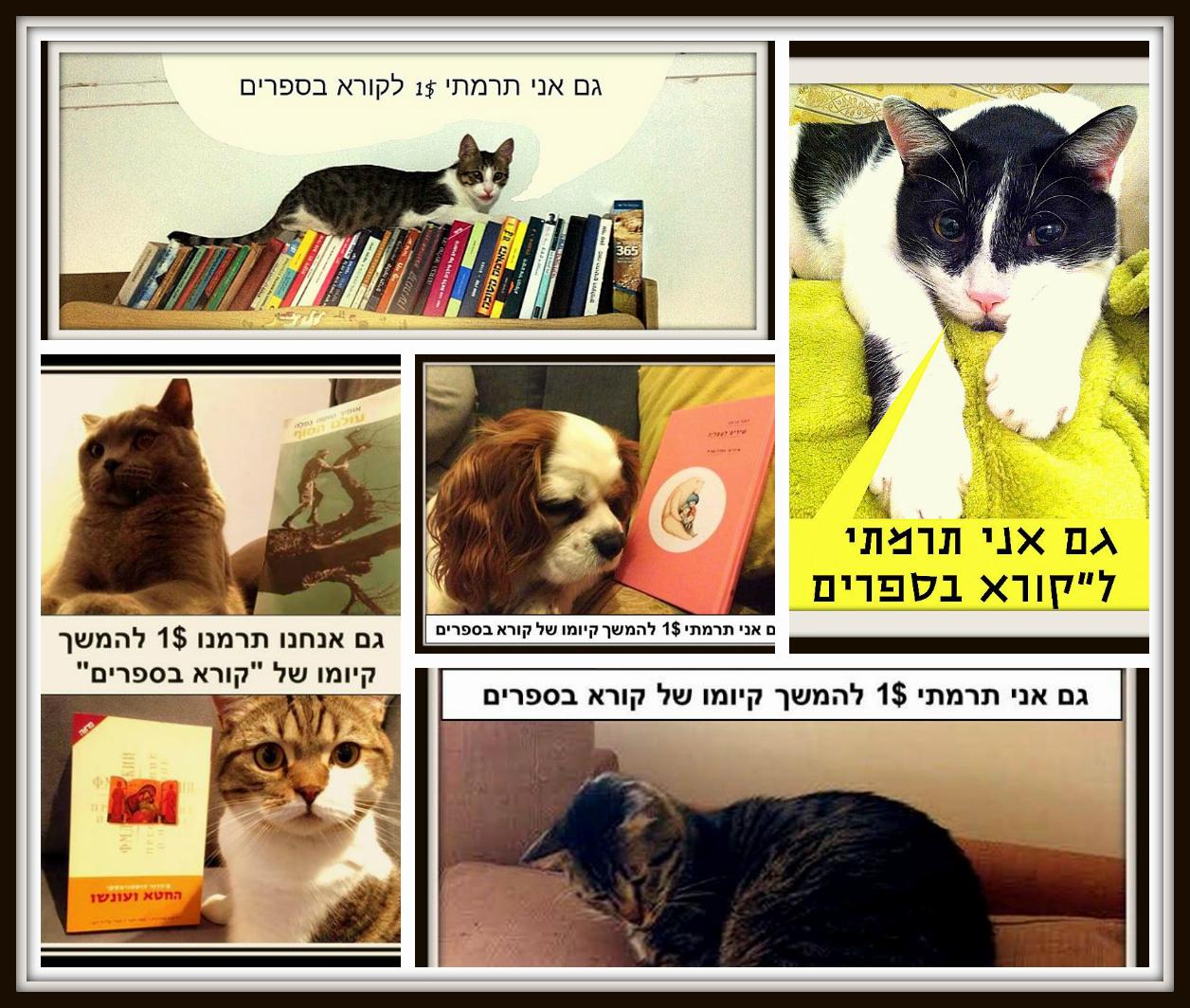חתולים וכלבה 23 בינואר